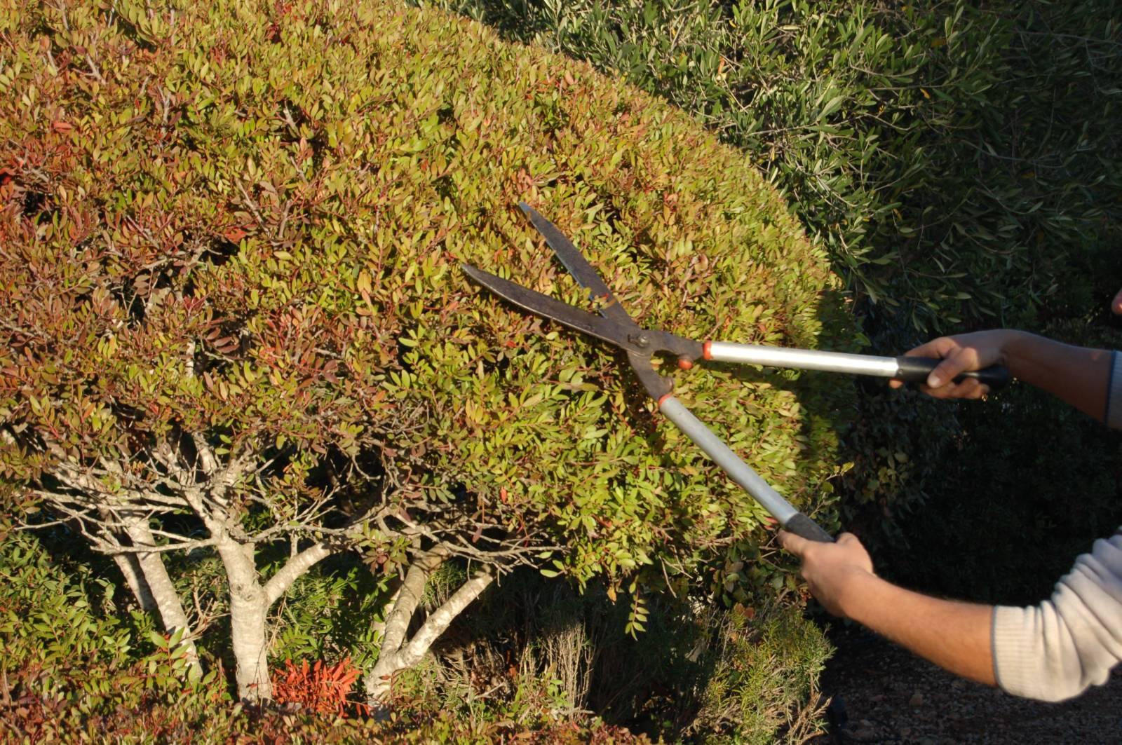 Les outils de jardin pour la plantation et l\'entretien à Sainte ...